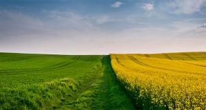 Сільськогосподарські землі